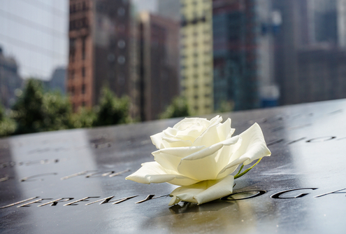 Flower at the site of 9/11 Memorial